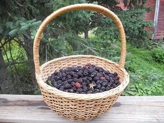 Easy Peasy DIY Berry and Fruit Liqueurs