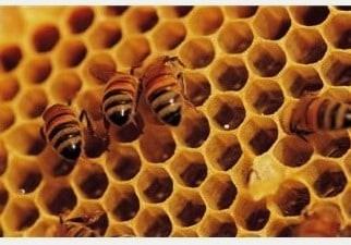 15 Alternative Uses For Honey