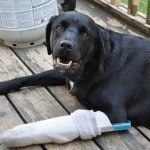 How to Deal with Common Pet Emergencies