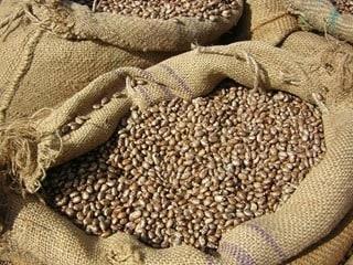 pinto beans in burlap sack
