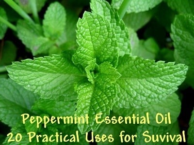 The Miracle of Peppermint Oil: 20 Practical Uses for Survival   Backdoor Survival