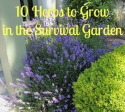 The Healing Garden: 10 Herbs To Grow in the Survival Garden