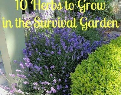 The Healing Garden: 10 Herbs To Grow in the Survival Garden