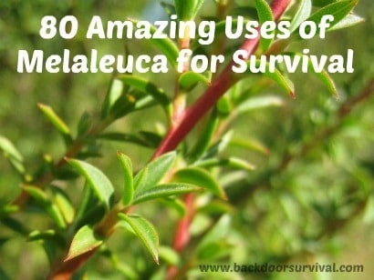 80 Amazing Uses of Melaleuca