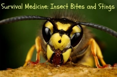 Survival Medicine: Insect Bites and Stings