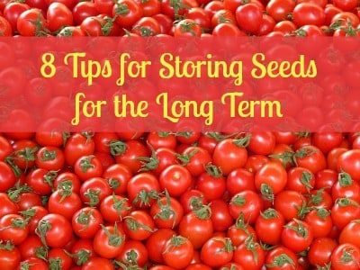 How To Store Seeds for the Long Term