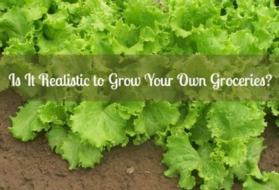 Is It Realistic to Grow Your Own Groceries?