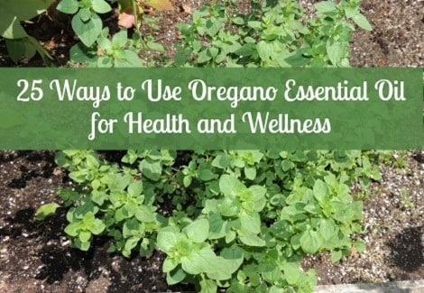 Oregano Essential Oil for Health Wellness