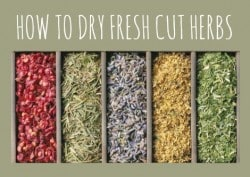 How to Dry Fresh Cut Herbs
