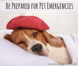 Be Prepared for Pet Emergencies - Backdoor Survival