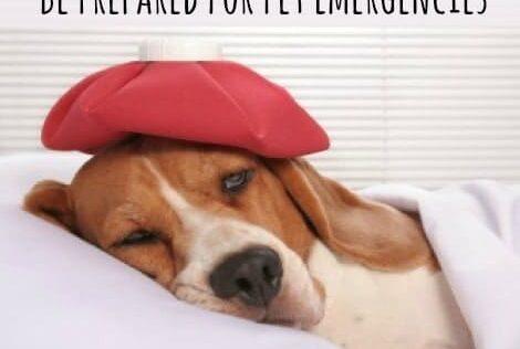 Survival Basics: Be Prepared For Pet Emergencies