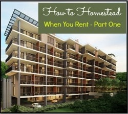How to Homestead When You Rent: Part One