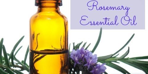 Powerful Healing Qualities of Rosemary Essential Oil