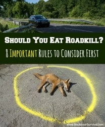 Should You Eat Roadkill? 8 Important Rules to Consider First - Backdoor Survival