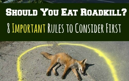 Should You Eat Roadkill? 8 Important Rules to Consider First