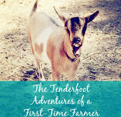 Tenderfoot Adventures of a First-Time Farmer | Backdoor Survival