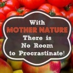 The Survival Buzz #193: With Mother Nature There Is No Room for Procrastination