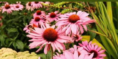 10 Useful Medicinal Plants To Cultivate From Seeds