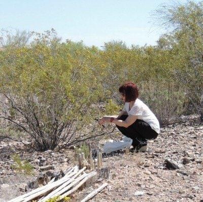 Collecting Biomass   Backdoor Survival