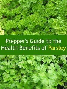Prepper's Guide to the Health Benefits of Parsley