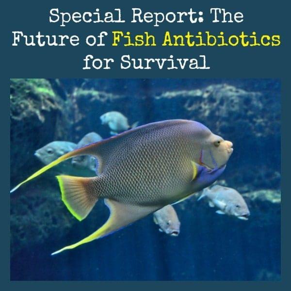 Future of Fish Antibiotics for Survival | Backdoor Survival