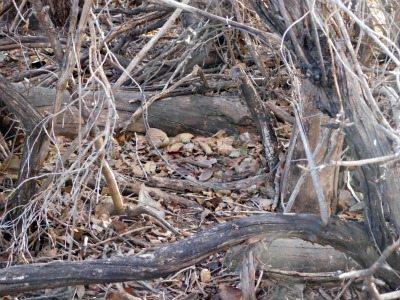Location of Snare | Backdoor Survival