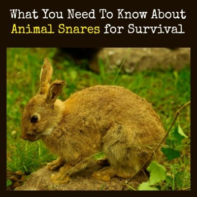 What You Need To Know About Animal Snares for Survival