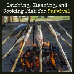 Catching Cleaning Cooking Fish for Survival | Backdoor Survival
