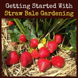 Getting Started With Straw Bale Gardening