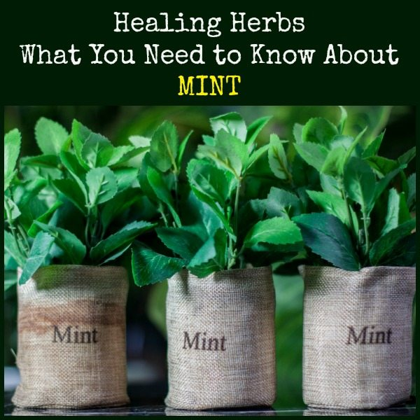 Healing Herbs What You Need to Know About Mint | Backdoor Survival