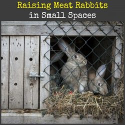 How to Raise Meat Rabbits in Small Spaces