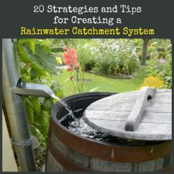 20 Strategies and Tips for Creating a Rainwater Catchment System