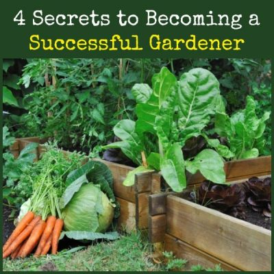 4 Secrets to Becoming a Successful Gardener