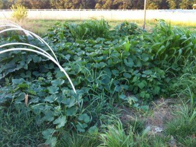 Dan Chiras Green Garden | Backdoor Survival