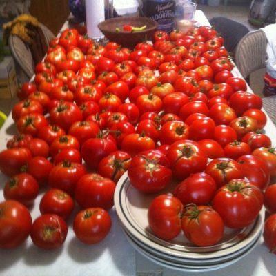 Dan Chiras Tomatoes | Backdoor Survival