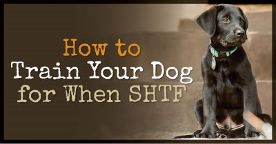 How to Train Your Dog for When SHTF
