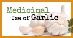 Health Benefits of Garlic: The Medicinal Use of Garlic