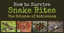 How to Survive Snake Bites – The Science of Antivenom