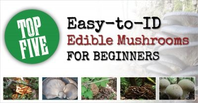 Top 5 Easy-to-ID Edible Mushrooms for Beginners