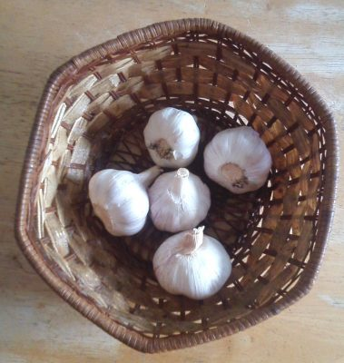 garlic bulbs can be used for medicinal purposes