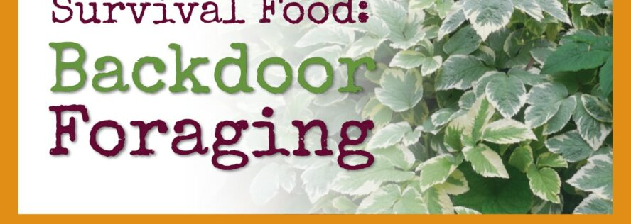 Survival Food: Backdoor Foraging for Healthy, Tasty Food Right Outside Your Door!