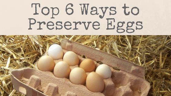 Top 6 Ways To Preserve Eggs