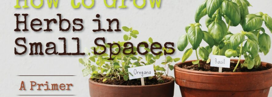 How to Grow Herbs in Small Spaces – A Primer