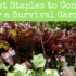 The 13 Best Staples to Consider for a Survival Garden this Spring