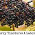 DIY Elderberry Tincture: A Labor of Love