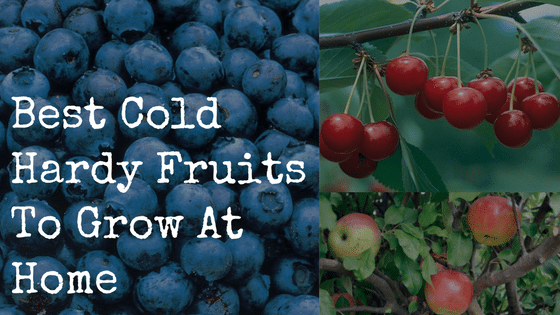 Best Cold Hardy Fruits To Grow At Home