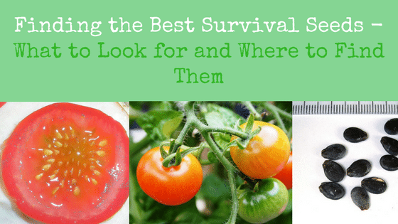 Finding the Best Survival Seeds – What to Look for and Where to Find Them