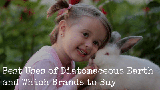 Best Uses of Diatomaceous Earth and Which Brands to Buy
