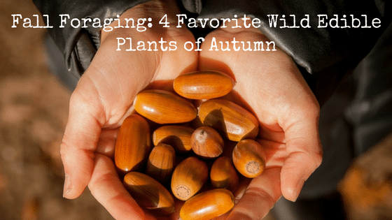 Fall Foraging: 4 Favorite Wild Edible Plants of Autumn