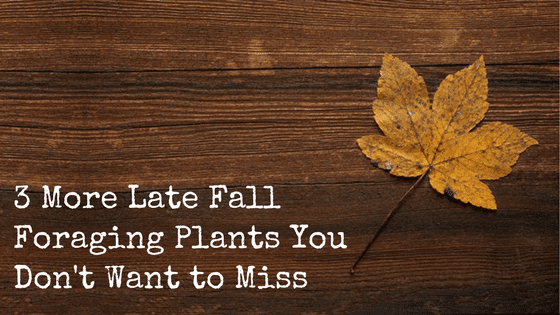 3 More Late Fall Foraging Plants You Don't Want to Miss